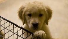 How Do I Become a Registered Dog Breeder?