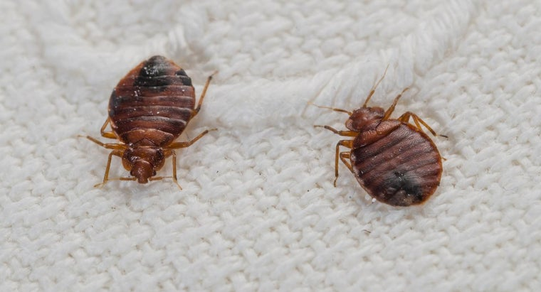bed-bugs-jump