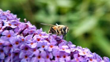 Do Bees Urinate?