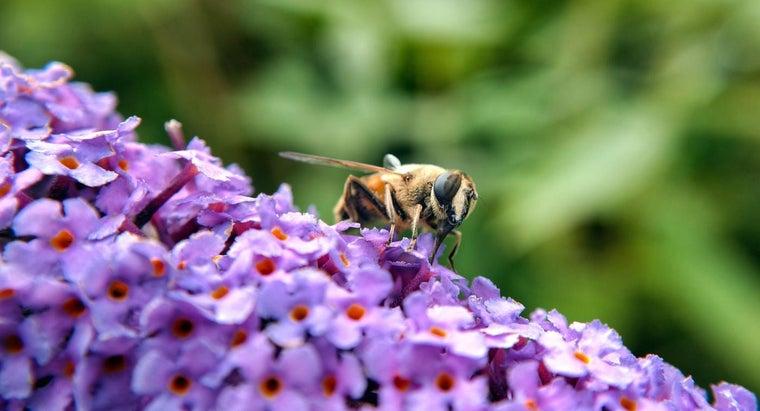 bees-urinate