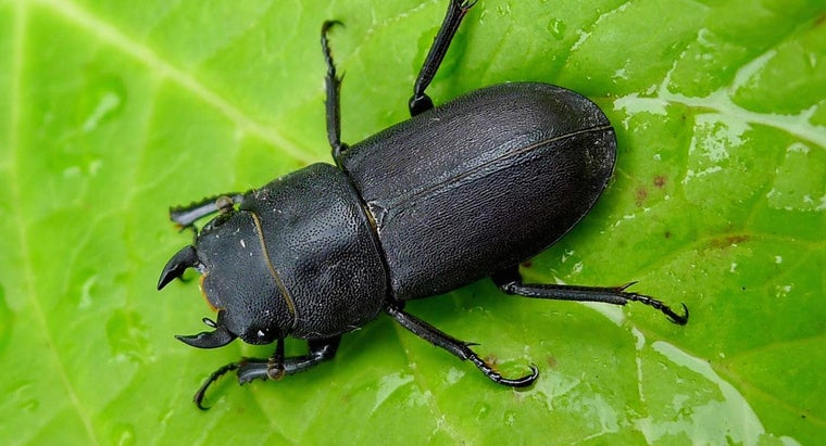 beetles-live
