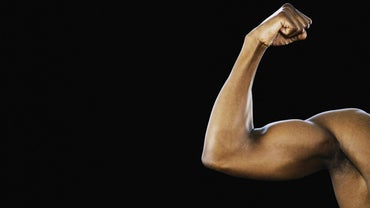 What Is the Bicep Size of the Average Man?