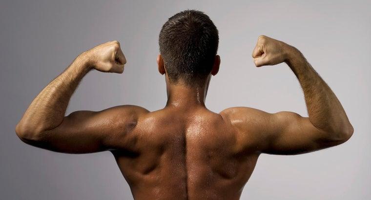 biceps-classified-skeletal-muscle