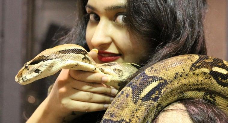 big-can-ball-python