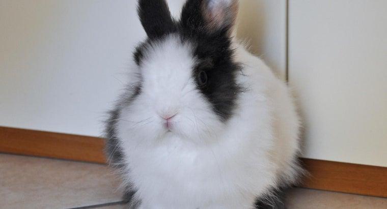 big-dwarf-rabbits-grow
