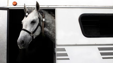 How Big Is a Horse Trailer?