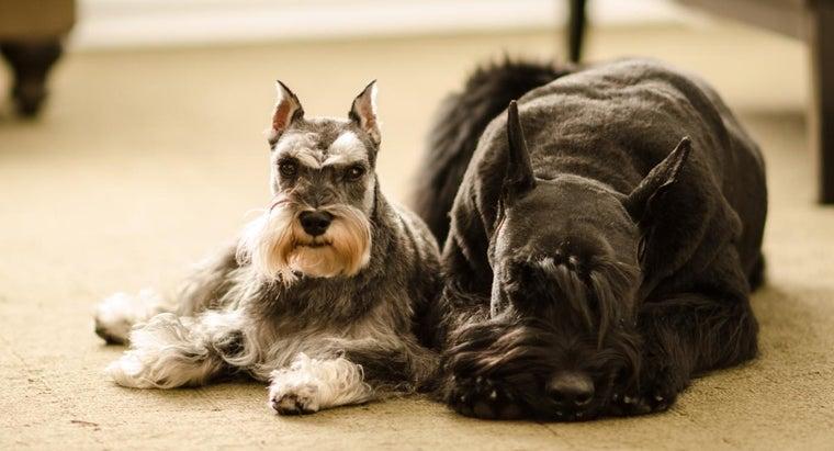 big-hypoallergenic-dogs