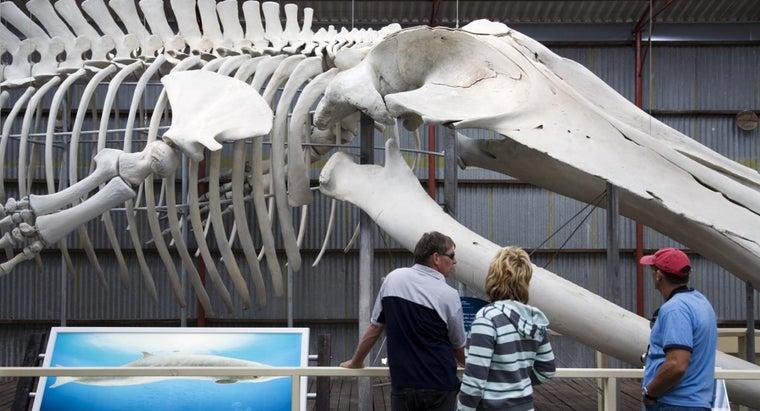 biggest-animal-ocean