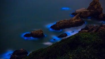 What Is Bioluminescent Algae?