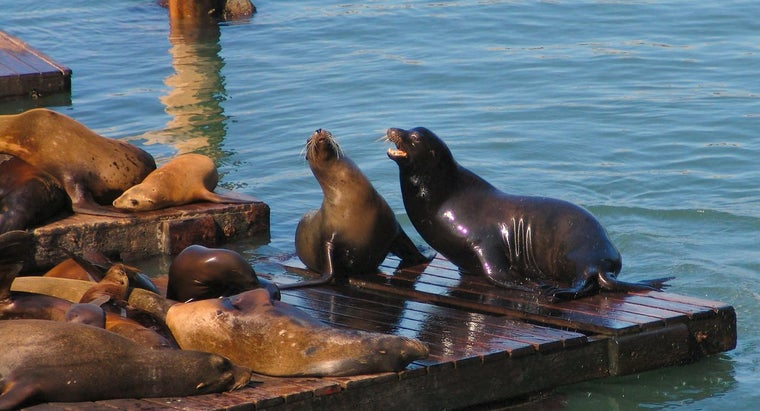 biome-sea-lion