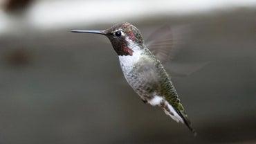 What Bird Flies Backwards?