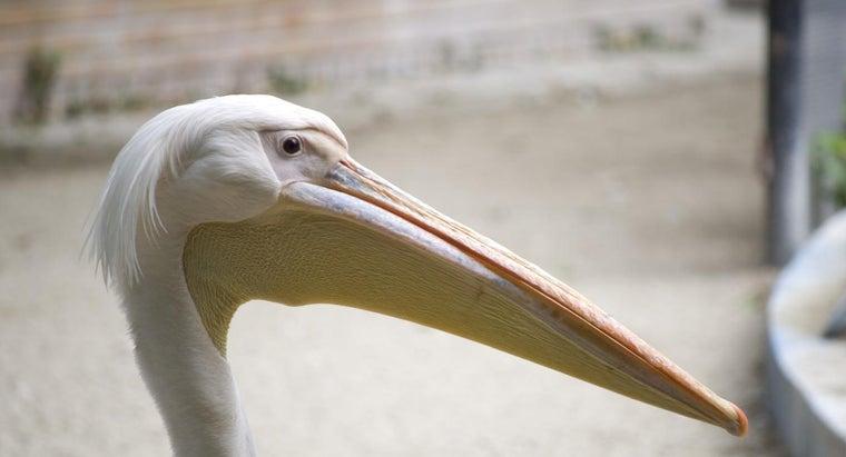 bird-use-its-beak