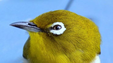 Are Birds Color Blind?