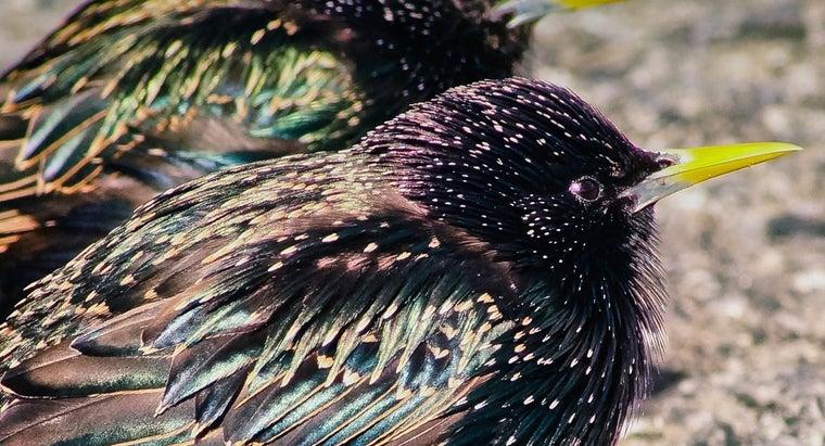 birds-common