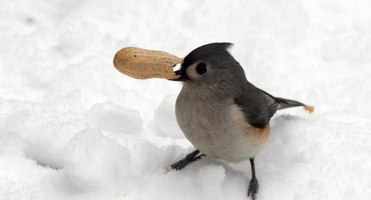 birds-hibernate