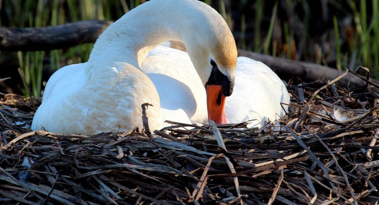 birds-lay-eggs