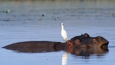 What Do Birds and Mammals Have in Common?