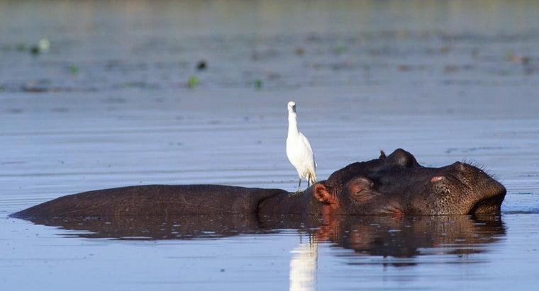 birds-mammals-common