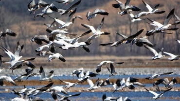 Which Birds Migrate in the Winter?