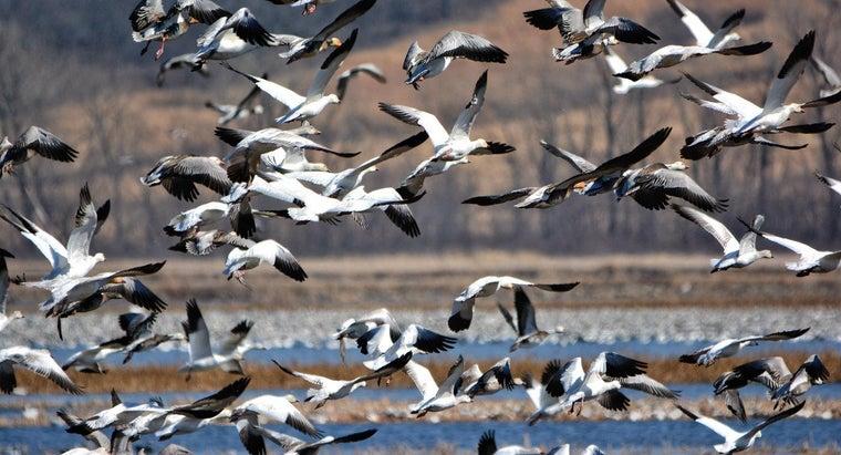 birds-migrate-winter