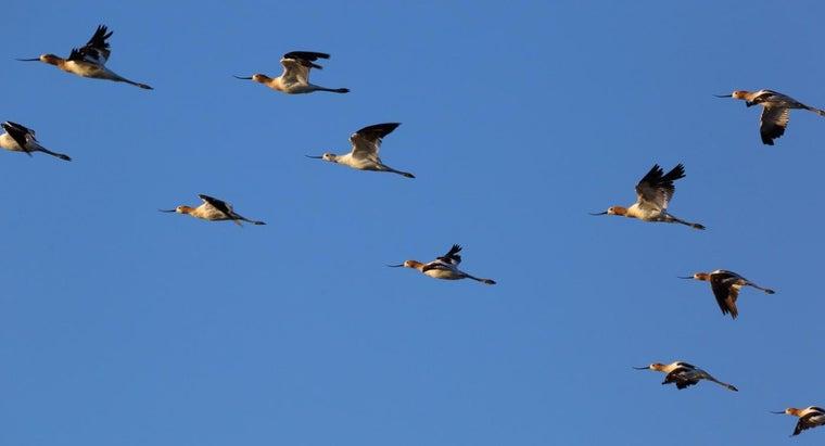 birds-swarm