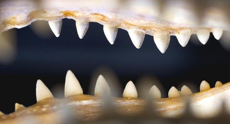 bite-pressure-alligator