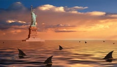 Which Bites More People: Sharks or New Yorkers?