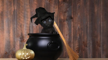 Why Are Black Cats a Symbol of Halloween?