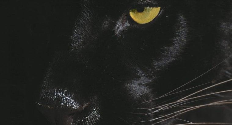 black-jaguars