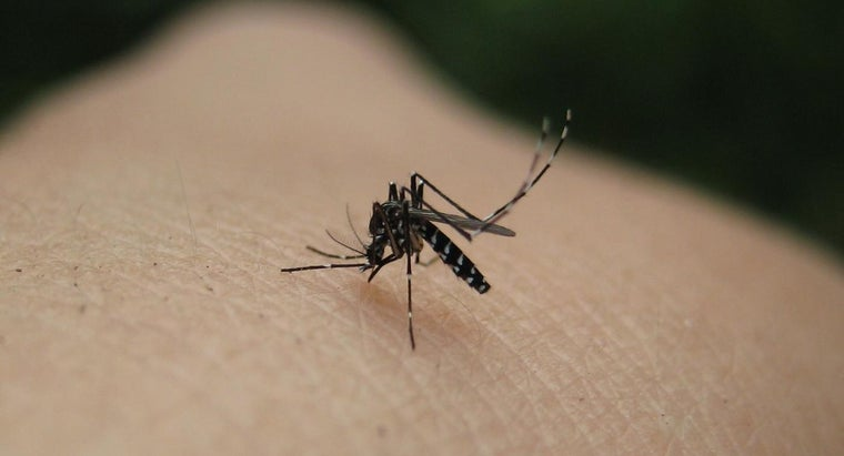 blood-type-mosquitoes-like