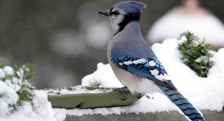 body-temperature-bird