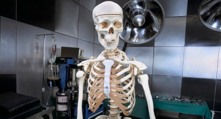 bones-hollow