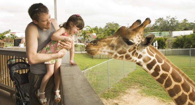 bones-necks-humans-giraffes