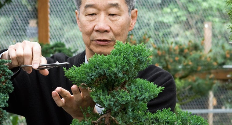 bonsai-tree-passed-down-within-family