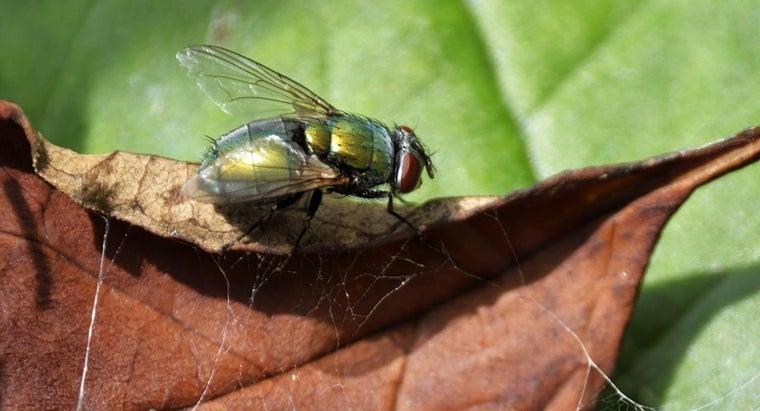 bot-fly-infestation