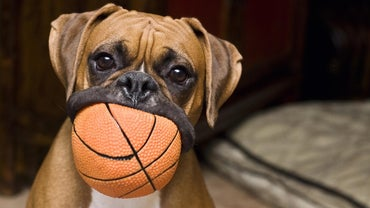 Are Boxers Dangerous?