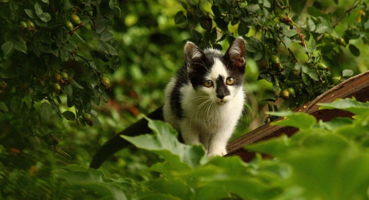 boy-kitty-names