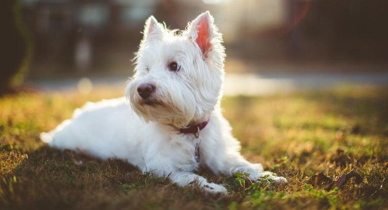 breed-cesar-dog-food-dog