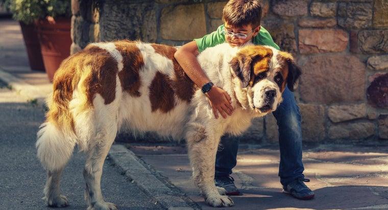 breed-dog-beethoven