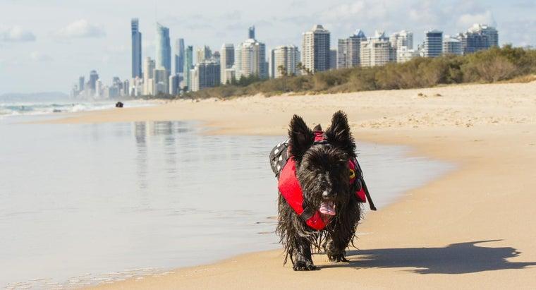 breed-dog-cannot-swim