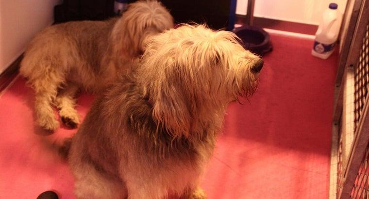 breed-dog-sandy-movie-annie