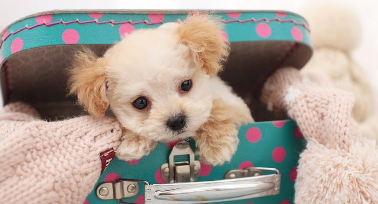breeds-cute-fluffy-dogs