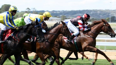 What Breeds of Horses Are Used for Horse Racing?