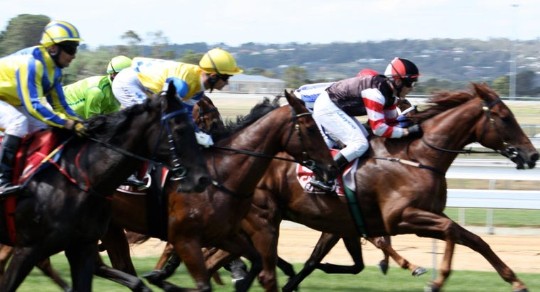 breeds-horses-used-horse-racing