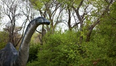 Why Was the Brontosaurus's Name Changed to the Apatosaurus?