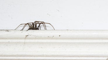 Which Bugs Are Most Commonly Found in the House?