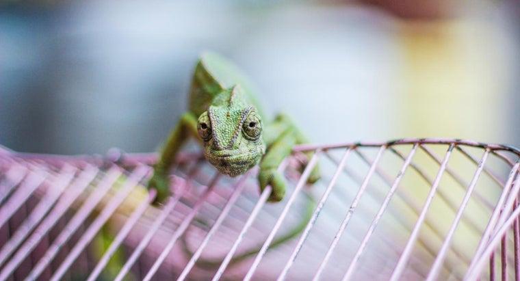 build-reptile-cage