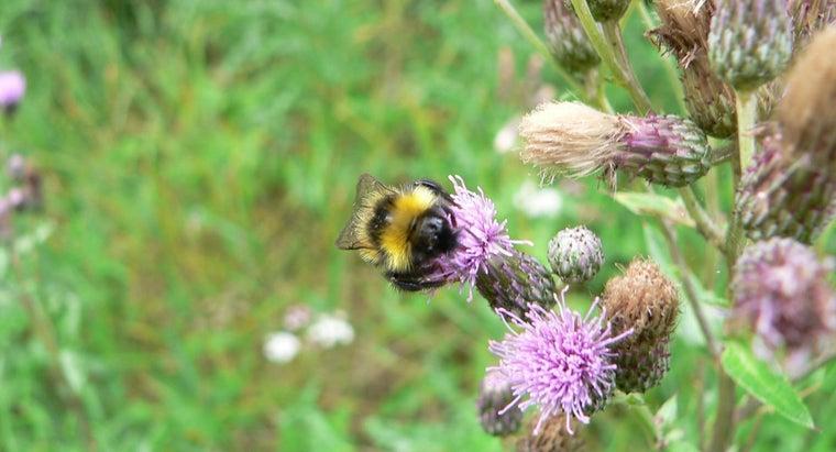 bumblebees-sting