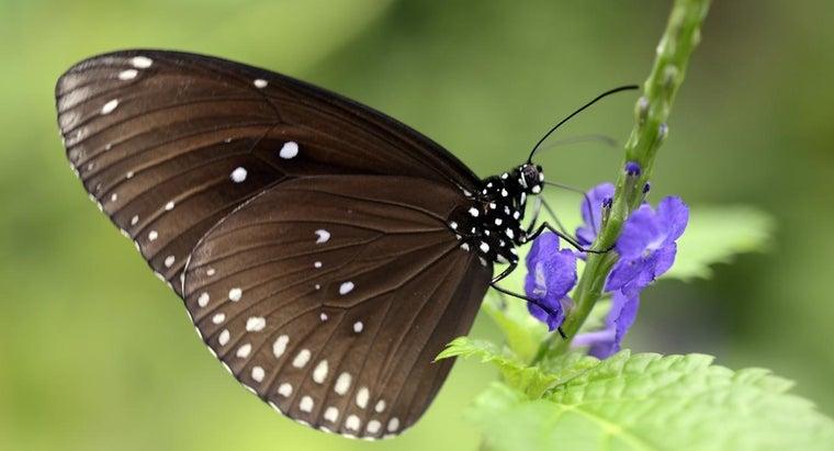 butterflies-breathe