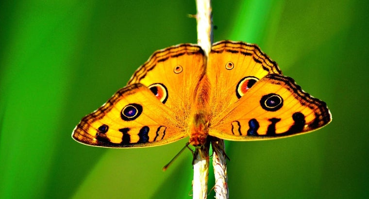 butterflies-protect-themselves